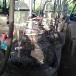 Oud M1 - distillation in progress